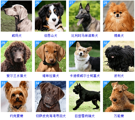 昆明犬有几个品种_犬品种_护卫犬品种
