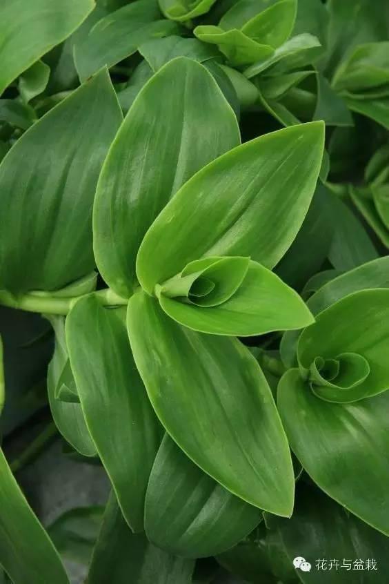 微信号:huahuipz 喜欢环境植物      声明:该文观点仅代表作者本人,搜