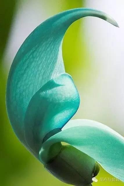 关注微信公众号:花卉与盆栽,微信号:huahuipz