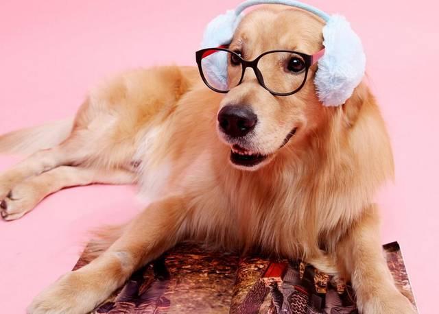 宠物喂养知识_宠物狗知识_宠物知识