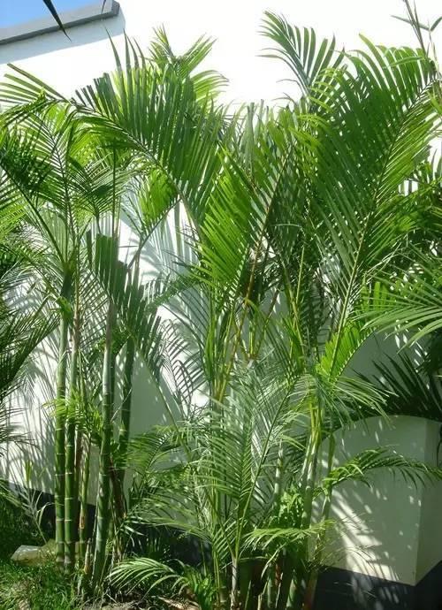 关注微信公众号:花卉与盆栽,微信号:huahuipz 问题环境植物      声明