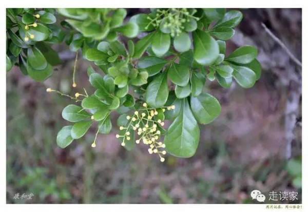 三亚最常见的植物大全,再也不用担心叫不出名字了!