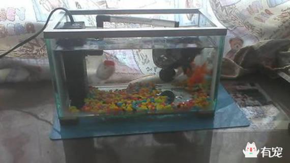 福利!教你自制一个鱼缸过滤器!_手机搜狐网图片