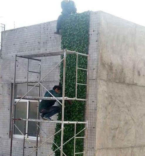 植物盆景造型_仿真植物造型_造型植物养护方案