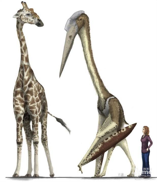 风神翼龙和长颈鹿和人的比较