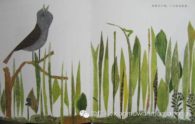 伯劳开口唱,一寸虫动身量.东非夜莺西图片