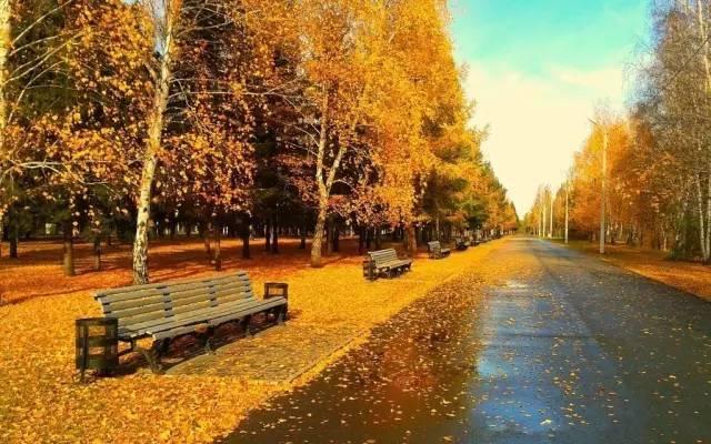 有梧桐树的秋天才最有味道!而思南路恰恰拥有最繁茂最精致的梧桐街景.