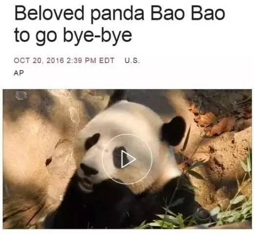 《华盛顿邮报》:拜拜宝宝.大熊猫2017年冬天要回中国了.