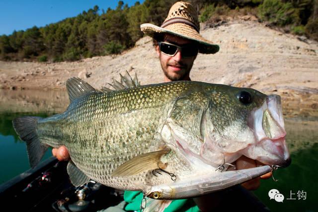 这种钓组在海钓中使用不是那么广泛,但是根据不同的水域情况,有时也图片