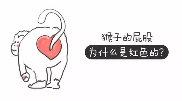 天津动物园的猴屁股为什么变红了?看图片前请做好思想