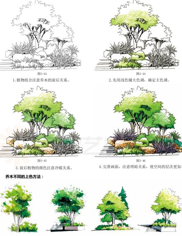景观植物马克笔表现 (1),根据乔木的生长习性,完成基本的形体刻画