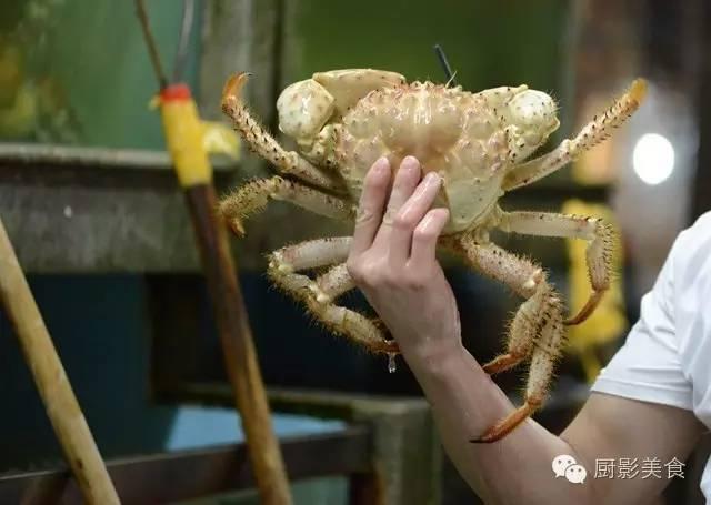 【面包蟹知识百科】面包蟹怎么做好吃 的营养价