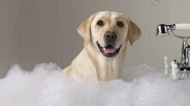 周岁之内的狗狗可以经常洗澡吗_洗澡本身不会使狗狗闹肚子,只要水温合适,室内温度可以就好.