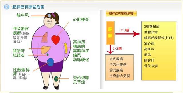 腹部减肥瘦身方法