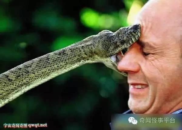 大蛇吃人事件_动物咬人食人的罕见恐怖画面盘点:大蛇活吞农妇