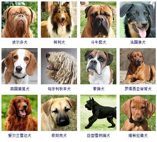 军犬品种幽灵犬图片_中小型犬品种大全 狗狗_犬品种