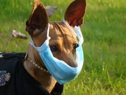 雾霾天,你的狗狗戴口罩了吗?