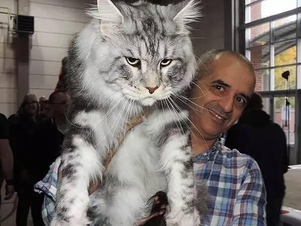 猫有多少种猫科动物大约有35种(组图)