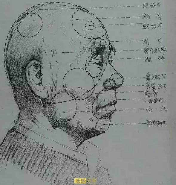 人体的肚子内部结构�_超级美术课 干货!素描结构和人体动态超详细分析图