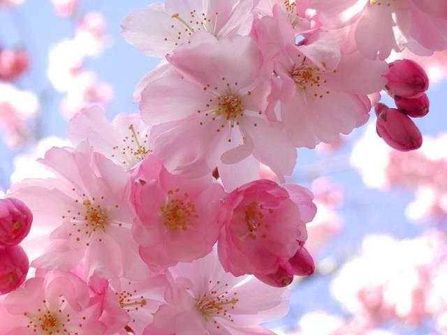 中国的国花是什么花?【常见花的英文表达大集