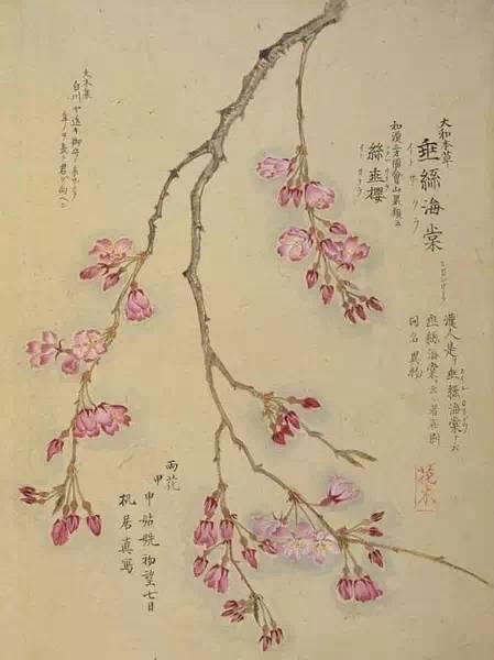 风有信,花不误:二十四番花信风手把手教农户种植猕猴桃图片