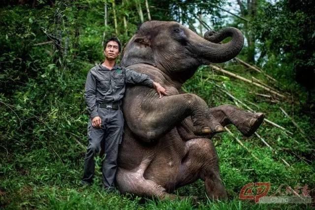 熊朝�:jk9al��N�Y��xn�)_中国云南亚洲象种源繁育及救助中心副总经理熊朝永和他的象伙伴在一