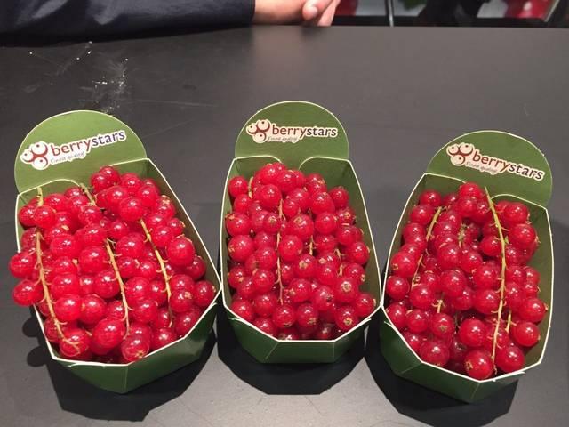 荷兰Berrybrothers公司鲜食红加仑惊艳柏林展