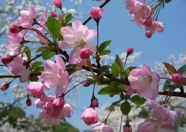 春天,南通这些地方美极了,小长假一定要去!