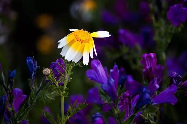 生命的酸楚与春天的舒展形成强烈的反差,听着听着不知不觉陷入了一种疼痛的境地,直至热泪盈眶,莫扎特整个寒惨的人生,其忧郁内省也都融化在清澈如春天的音乐中,你听得见树影枝桠上的鸟声?你看得见过大海最深处的透明?莫扎特渴望春天,渴望生命,梵高也渴望生活,在最寒碜的小屋里,最肮脏的角落里,我发现了图画。前个月我手指意外受伤,不能止血而狂奔医院,泪眼汪汪地在医生轻言细语的抚慰下缝了五针,夜不能眠的疼痛折磨着,聆听音乐,吟诵曹操《苦寒行》,用九个指头一字一句敲打出文字,当冬还蛰伏在树梢上的芽苞里,我就渴望春
