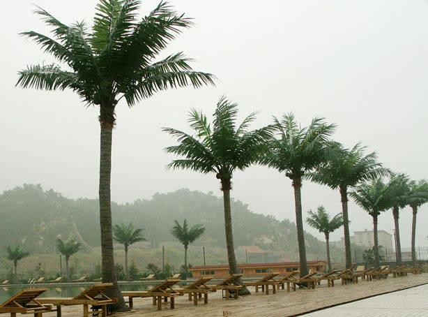 仿真椰子树具有很好的装饰效果