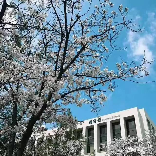 釜山镇海樱花节,你有没有被美哭
