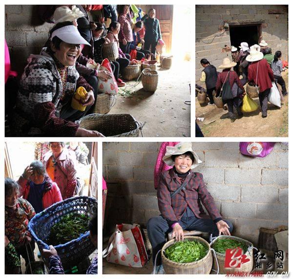 红仑春来自海拔800米的高山云雾茶(内含福利)