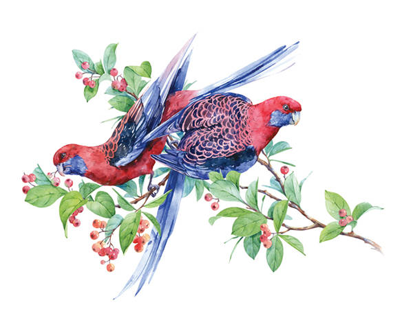 夜莺与玫瑰英文版_成人童话:夜莺与玫瑰