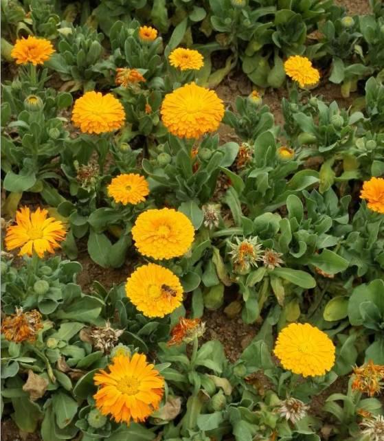你还可以偶遇花丛中的一只小蜜蜂图片