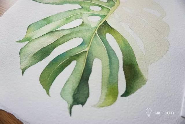 手绘北欧风格的龟背竹水彩画diy教程