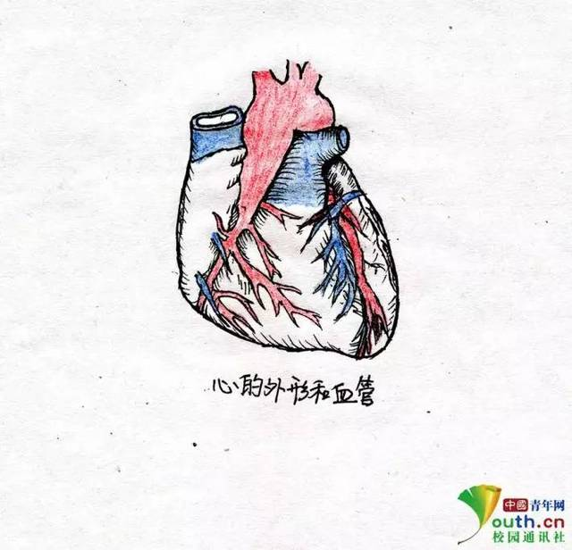 【趣读】大学生手绘解剖图走红 学医的都是隐形画家