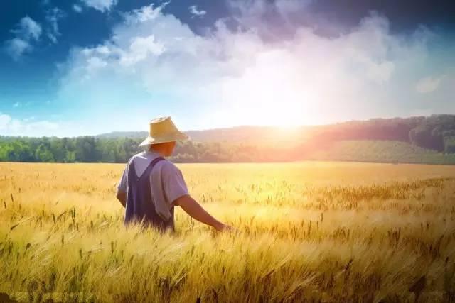 农村大奶草垛性爱_眼看就要收麦了,大荔娃你还记得那些年麦草垛里的时光