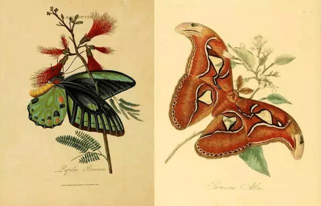 百年前的经典手绘生物图谱