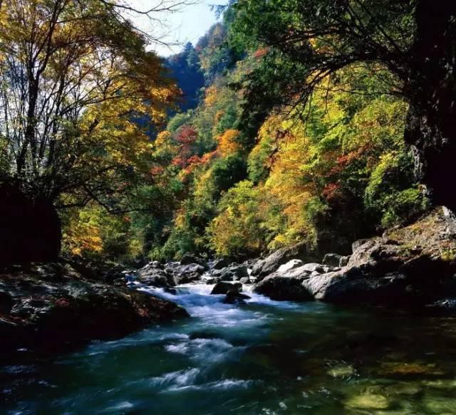 神农架原始森林图片
