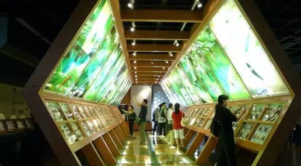 """厦门科技馆有国内首创的以海洋科学为主题的展馆——""""海峡两岸海洋图片"""