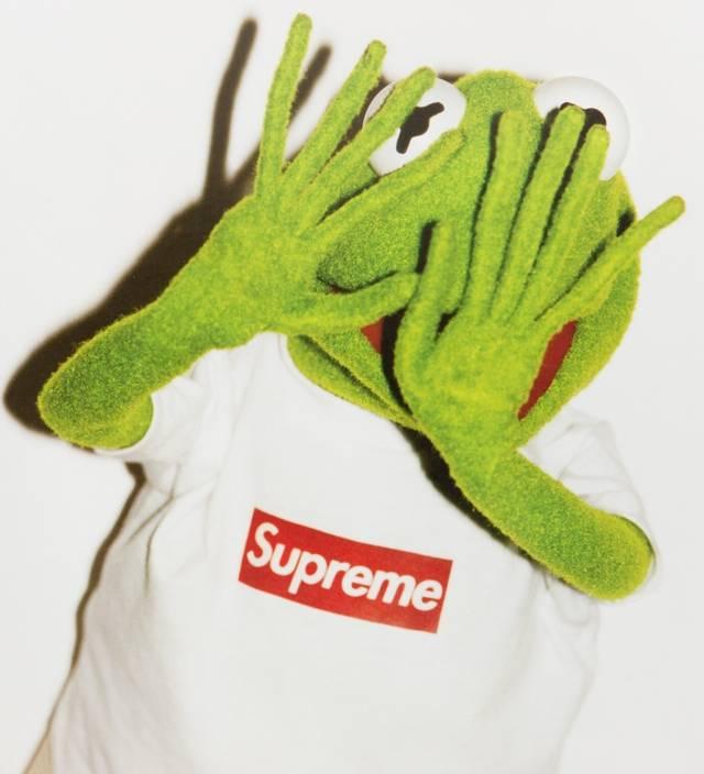 (kermit the frog, 2008)图片