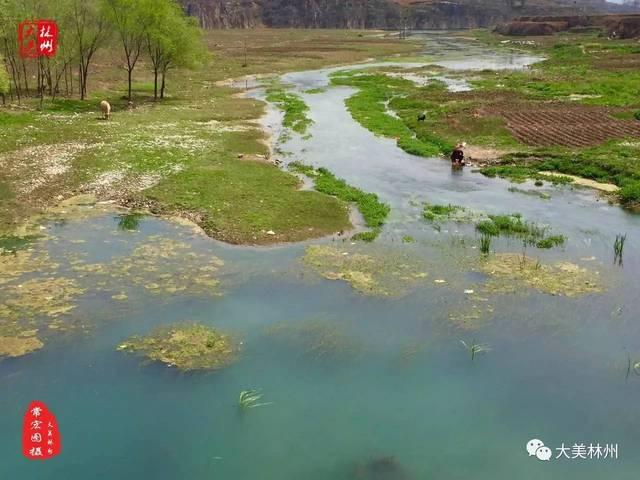 林州淅河岸边(淇淅河国家湿地公园)雉鸡斗艳图片