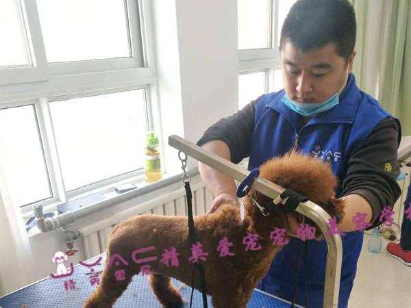 宠物美容师一个月工资是多少