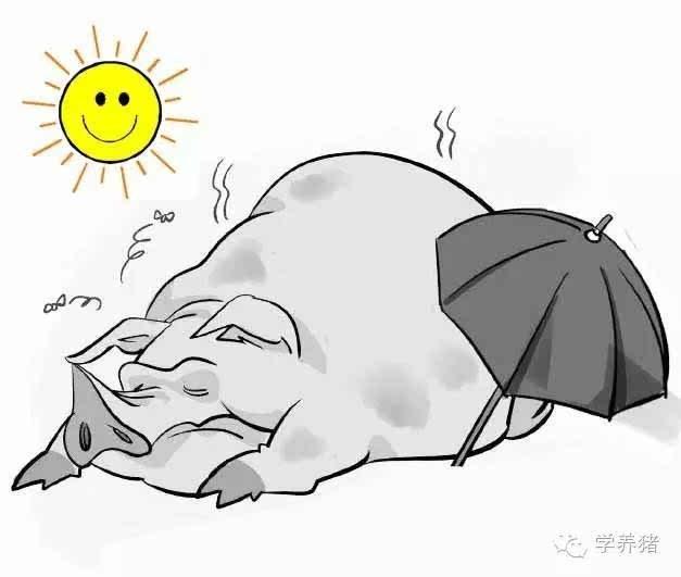 2、鸡猪婚配适合睡什么方向的床:鸡和猪的配婚