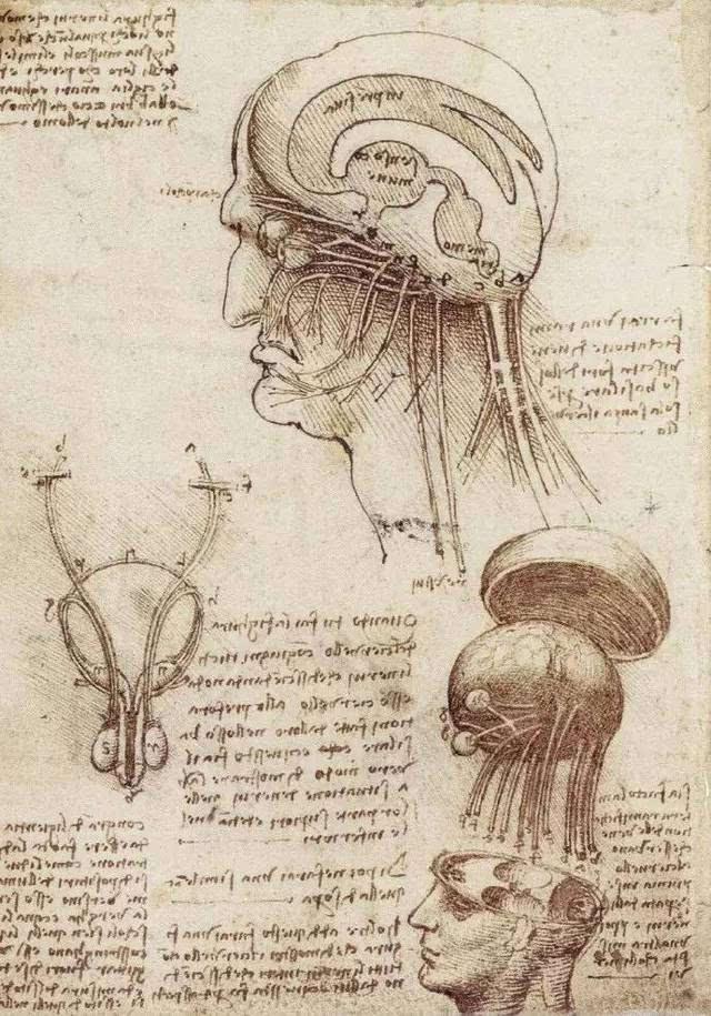 达芬奇解剖结构图