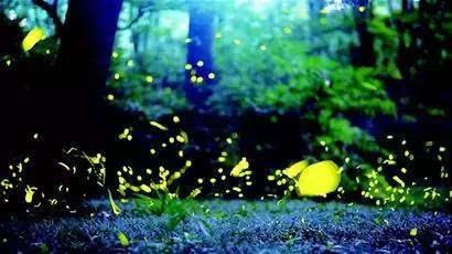 邛崃天台山是亚洲最大的萤火虫观赏基地,这里目前已经发现了二十多个
