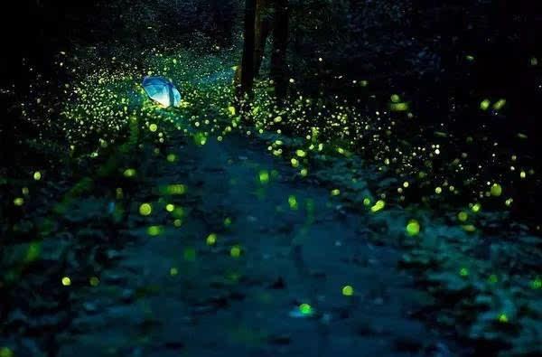 每一只萤火虫都在用短暂的一生,默默发光