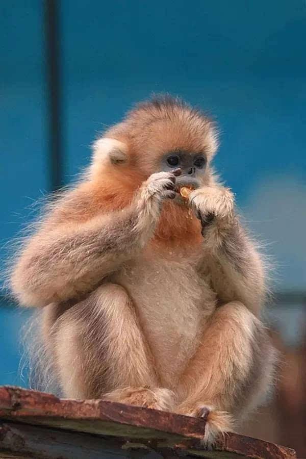 郑州市动物园,算是小妖比较喜欢的一个地方,可以看到很多可爱的小动物