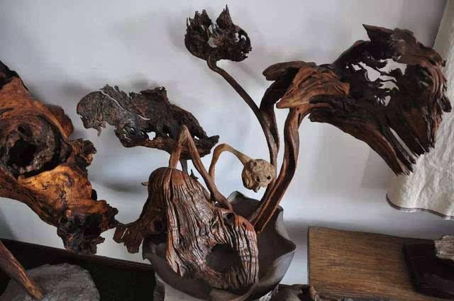 是大自然天然造化的独一无二的作品,渐渐地,他由盆景喜欢上了根雕艺术
