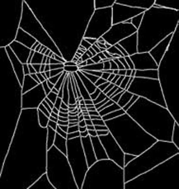 科学家让蜘蛛吸毒,然后让它织网,结果笑坏了图片